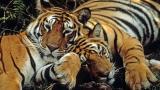 Intian luonnon ihmeet